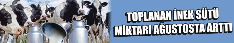 Toplanan İnek Sütü Miktarı Ağustosta Arttı