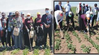 Vali Aydoğdu Çapa yaptı traktör sürdü, çiftçilerin gününü kutladı